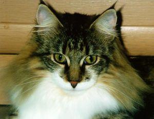 Felidae v.Tim-Est