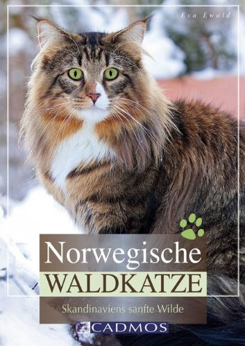 Norwegische Waldkatze - Skandinaviens sanfte Wilde